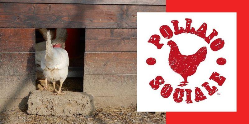 il pollaio sociale